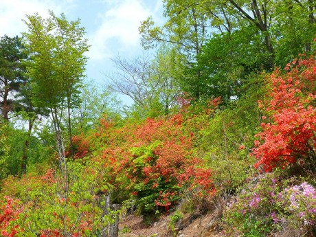 花と香りの森ツツジ