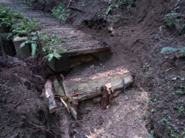 倒木で階段を作りました