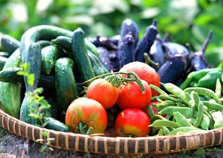 地元新鮮野菜の数々
